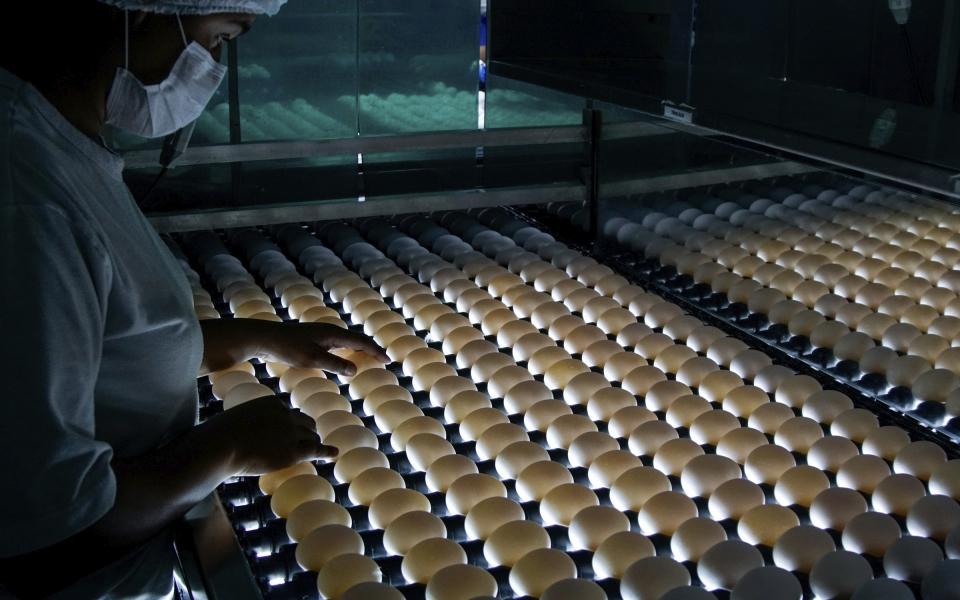 Empresa do oeste do Paraná fornecerá ovos embrionados para produção da Butanvac